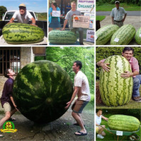 Wholesale Plant Farms - 2018 Hot Rare Giant Watermelon Seeds 50pcs Fruit seed Vegetable Interest So Sweet Easy to plant For Garden & Farm Family Plant