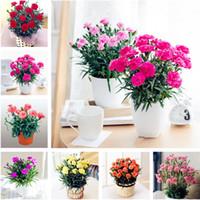 ingrosso semi di garofano-Spedizione gratuita 50 pezzi semi di garofano famiglia balcone quattro stagioni piante in vaso facile da piantare fiori fiori recisi facile da vivere garofani