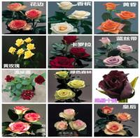sementes de flores coloridas rosa venda por atacado-Atacado Barato Novas Variedades Colorido Rose Flor Semente 10 Cor 60 Sementes Por Pacote Lindo Sementes de Flores Para Jardim