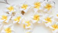 argila de flor branca venda por atacado-25 pcs Branco Fimo Polymer Clay Plumeria Flor Beads 20mm tamanho médio feitas à mão contas de poli floral