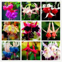 100 pcs multiple color Fuchsia Hybrida Hort Seeds Bonsai Lantern Flowers,For Garden Home indoor plant