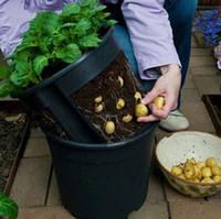 bio-pflanzer großhandel-Pocketgarden 1 Stück Kunststoff Pflanzer Kartoffeltopf Familie Garten Balkon Gartentöpfe aus Bio-Gemüse Pflanzkartoffel