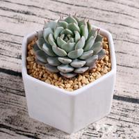 ingrosso vaso di bonsai in ceramica-2018 vasi in ceramica per bonsai all'ingrosso mini fornitori di vasi in porcellana bianca per la semina di piante da interno succulente fioriere vivaio