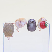 Wholesale tea sound - 3-4cm Cute Animals Hedgehog Shape Toys Doll For Mug Cup Tea Bag Holder Tea Tools OPP Action & Toy Figures 10 pcs