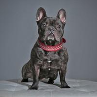 ingrosso collari per cani di piccole dimensioni-Nuovi collari per cani di cane in pelle PU con borchie rivettate a freddo e 4cm per cuccioli di cani e gatti di taglia media