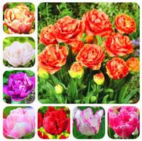 ingrosso piante del cortile-Doppio semi di tulipano semi di fiori rari perenne pianta bonsai regalo per la casa giardino cortile abbellire facile da coltivare 100 pz spedizione gratuita