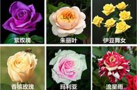 ingrosso nuovi semi di fiori-Nuove varietà 10 colori Rose Flower Seeds 50 semi per confezione Semi di fiori per piante da giardino di casa