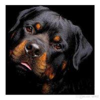 ingrosso dipinti-DIY 5D Diamond Paintings Dog Head Craft Frameless Classic Wall Art Nuovo modello circolare piazza trapano immagini 14 24lx2 Ww