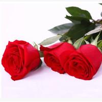 ingrosso piante di foglie viola-Spedizione gratuita rosso e viola semi di rosa 30 pezzi semi per confezione * nuovo arrivo Ombre piante da giardino di charme