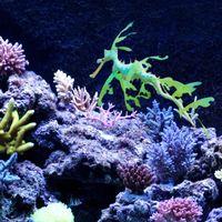 Wholesale home aquarium online - Novelty Aquarium Silicone Leafy Seadragon For Home Fish Tank Decoration Ornament Soft Artificial Simulation Sea Dragon New Arrival wt B