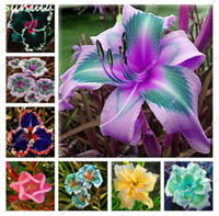 Wholesale rainbow rare - 50 Pcs Daylily Seeds Keep the Faith Reblooming Seeds Rare Holland Rainbow Daylily Flower Exotic Plant Can Eat Tasty Vegetables