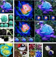 schwarze blaue blumen großhandel-Patio Rosensamen Garden Supplie, blau, Meteor, rot, schwarz, rosa, hellblau, Regenbogenrosenblüten Garden Supplies I183
