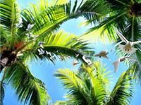 Wholesale mural definition - window mural wallpaper High-definition three-dimensional aesthetic Coconut sunshine flying dove ceiling fresco