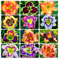 Wholesale Beautiful Lily - Mixed Daylily Seeds Indoor Bonsai Rare Colou Hybrid Lily Seed Beautiful Lilium (Not Lily Bulbs)New Day Lily Edible Plant 100 Pcs