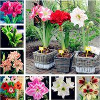Wholesale flower plants for sale - Hot Sale 100 pcs Amaryllis seeds,Amaryllis Flower Seeds, bonsai flower seeds hippeastrum Barbados Lily plant for home garden plant