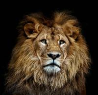 abstrakte ölgemälde tiere großhandel-Modernes Geschenk Giclée-Druck Kunst Home Kunst Wand Dekor Abstrakt Tier Lion Ölgemälde Bild auf Leinwand für Wohnzimmer Poster Dekor gedruckt