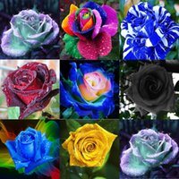 Wholesale Chinese Planting Pot - Free Shipping Cheap New Dream Rose Flower Seeds *100 Seeds Per Package* Balcony Potted Flowers Garden Plants