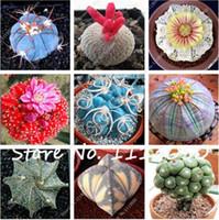 zierblumen großhandel-100 Stücke Mixed Kaktus Samen Indoor Vielfältig Zierpflanzen Samen Seltene Sukkulenten Blumensamen Können Reinigen Die Luft Für Jardin