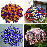 Wholesale petunia seeds - 100 pcs Hanging Petunia Seeds Melissa Original Flower Seeds Perennial Flowers for Home Garden Bonsai Pot Planting Petunia