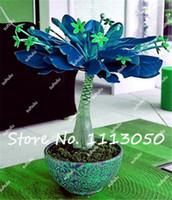 wachsende blumen großhandel-Neu! 1 Stücke Pachira Macrocarpa Samen, Mini Bonsai Geld Baum Anlage, Büro Desktop Blumen Samen, Purify Die Luft, Einfach zu Wachsen