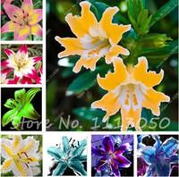 perfume de lirio al por mayor-Envío Gratis 100 Unids 10 Colores Lily Semillas, Semillas de Lirios de Perfume baratos, Raras Plantas de Jardín de Flores de Color Semenatsvety Jardín Perenne