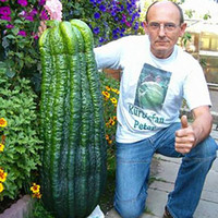 Wholesale Perennial Sales - 50 pcs hot sale rare giant cucumber seeds organic vegetable plants the budding Rate 90%,Seeds of perennial garden for garden