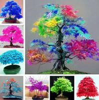 ingrosso piantare alberi di acero-Semi di albero Quattro stagioni foglia rossa semi di acero bonsai blu acero albero giapponese semi di acero Balcone piante per la casa Forniture da giardino I183