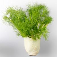 семена травы оптовых-Семена фенхеля, зеленые семена овощных трав для домашнего сада семян растений 100 частиц / мешок