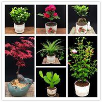 semillas de variedad al por mayor-12 variedades de semillas mezcladas de botánica 360PCS bonsai raras semillas de flores de botánica planta a todo color Un grupo de semillas de arce de jazmín rododendro en maceta