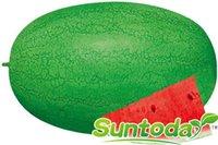 ingrosso semi di melone dolce-Suntoday CRIMSON SWEET WATERMELON Melone Citrullus lanatus Cinese Semi di frutta Giardino asiatico Pianta ibrida Non-OGM Semi freschi biologici