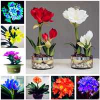 Wholesale Home Decorative Gifts - Free Shipping 120 Pcs Clivia Seeds, Rare Color Chinese Clivia Flower Seed,Home Garden Plants Bonsai Seed Semente Decorative Christmas Gift