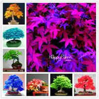 ingrosso albero di bonsai di natale-Promozione limitata nel tempo !!! 30 Pz / borsa semi di albero di acero giapponese, 13 colori misti mini semi di fiori dell'albero bonsai + regalo di Natale