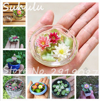 Wholesale plants lilies - 5 Pcs Mini Lotus Seeds New Hyacinth Pond Seeds Water Lily Seeds Best Germinate Lotus Flower Indoor Fissidens Flower Bonsai Diy Garden Plants