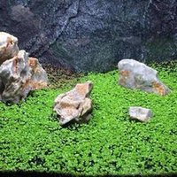 bitki su poşetleri toptan satış-Akvaryum Çim Tohumları Aile Suyu Tesisi Kolay akvaryum bitkileri tohumları su balık 1000 parçacıklar / torbayı büyütün