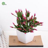 ingrosso prezzo del seme di fiore-Balcone semi invasatura Cina Cactus Semi Albero In Vaso Bonsai Cortile Casa Giardino Bonsai Pianta 30 pz T035