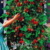 sebze kapları toptan satış-Promosyon! 100 ADET Ağacı Tırmanma Çilek Tohumları Avlu Bahçe Meyve ve Sebze Tohumları Saksı ile, # HWZRHO