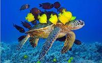 tecido de impressão flock venda por atacado-Sala de estar de casa decoração da parede da tela cartaz Pintura submarino animal tartaruga mar azul Wall Art Print Imagem Lona rebanho de peixe