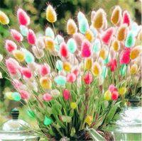 Wholesale bunny tails - 100 pcs Tropical ornamental plants Grass Seeds,Bunny Tails Grass Lagurus Ovatus,bonsai flower seeds,Decorate Home Garden