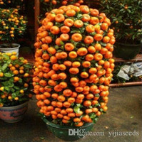 Wholesale citrus seeds - 20 pcs Bonsai Orange Seeds NO-GMO Mini Bonsai Tree Balcony Patio Potted Fruit Trees Kumquat Seeds Tangerine Citrus