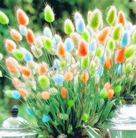 Wholesale Grass Pots - Beautiful 100 Pcs Ornamental Rabbit Tail Grass Seeds a Variety Of Color Mixing Of Grass Diy Potted Plant For Garden Ornamental