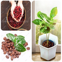Wholesale Coffee Gardens - 20 Pcs Coffee Bean Seeds Tropical Bonsai Tree Seeds Perennial Green Vegetable Fruit Coffee Tree Seeds for Home Garden Planting