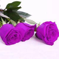 ingrosso giardino di rattan-Spedizione gratuita a buon mercato viola semi di rosa attrarre colore rosa 30 pezzi semi per pacchetto casa giardino semi
