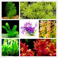 bitki su poşetleri toptan satış-100 adet / torba karışık türler su bitkileri akvaryum akvaryum dekorasyon çim tohumu akvaryum bitkileri tohumları