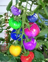Wholesale rainbow rare - 100pcs very rare imported rainbow tomato Seeds bonsai fruit & vegetable seeds Non-GMO Potted plants for home garden