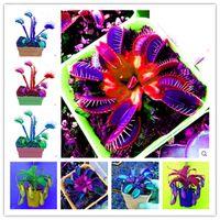 Wholesale venus flytrap seeds for sale - Group buy 100 Garden Potted Green Plant Flytrap Seeds Bonsai Dionaea Muscipula Giant Clip Venus Flytrap Plant Seeds Carnivorous Plant