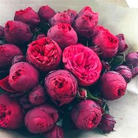 Wholesale Peonies Seeds - Bonsai Rare Chinese Peony Seeds Planting Of Greenery And Flowers Terrace Courtyard Garden Paeonia Suffruticosa Seeds 10 Pcs