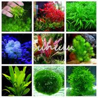семена аквариума оптовых-200 шт. / пакет аквариумные растения семена трава вода водные растения семена крытый декоративные растения семена травы для домашнего сада