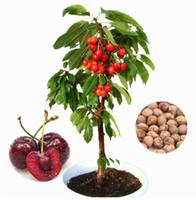 Wholesale Planting Cherry Seeds - 10 cherry seeds, Australia black cherry tree seeds rare fruit tree seeds for home garden planting