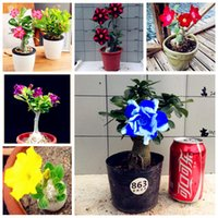 Wholesale Ornamental Flower Pots - Free Shipping 2 Pcs Bag Desert Rose Seeds Adenium Obesum Seeds Plant Pot Bonsai Flower Seeds for Home Garden Ornamental Plants