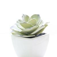 çiçekler çölü toptan satış-Ekran Çiçek Yapay Succulents Çöl Bitki Bonsai Simülasyon El Sanatları Kaktüs Dekoratif Küçük Bonsai Takım Bitki ile Pot